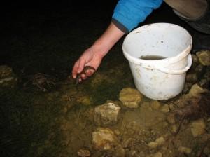 cowans newts
